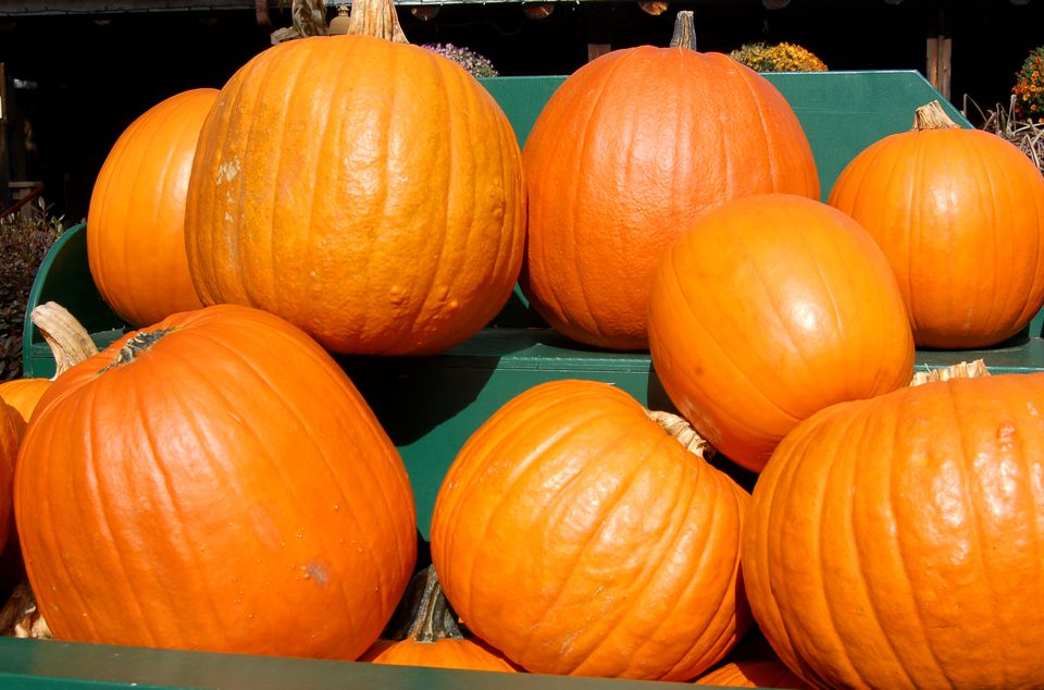 Image of pumpkins displayed at a roadside stand.