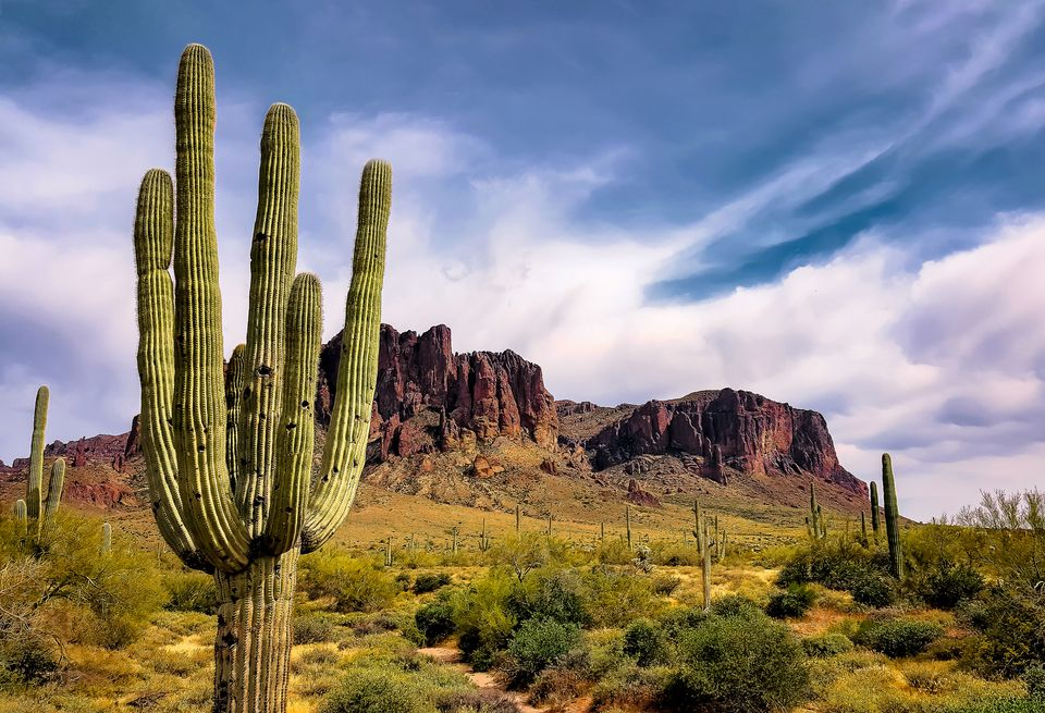 Saguaro Cactus By Superstition Mountains Against Cloudy Sky