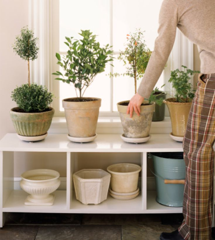 How To Use Plants as Feng Shui Cures. What Is the Feng Shui of Plants in the Bedroom