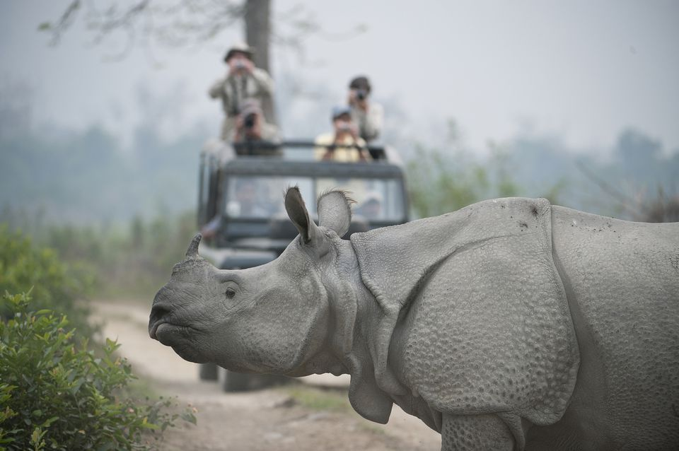 Rhinocerous at Kaziranga National Park
