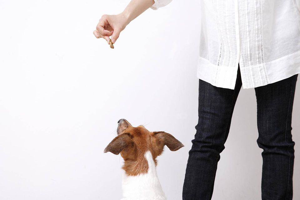 Woman feeding dog biscuit to her dog