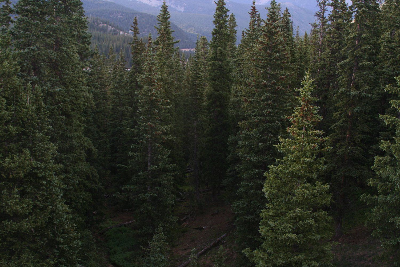 Coniferous Forest Definition Bird Habitats