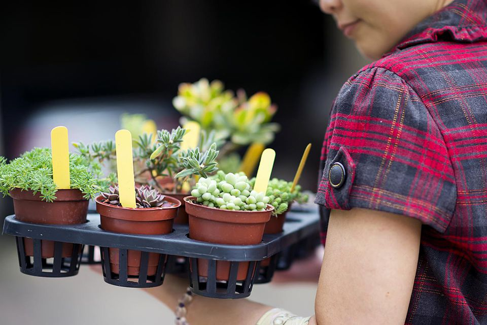Woman holding a plate of succulent plants