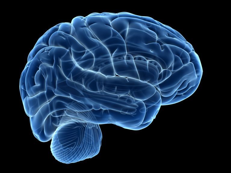 What is the Difference Between the Brain & the Mind?