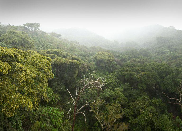 Rainforest Diversity