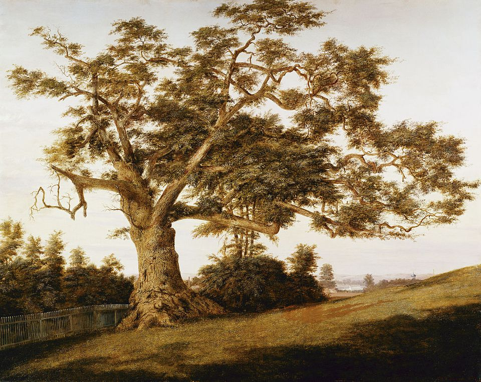 The Charter Oak by Charles de Wolfe Brownell