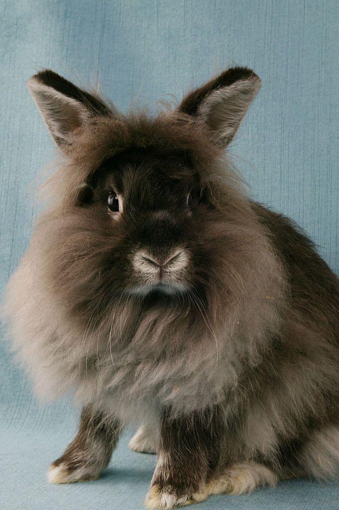 Pet rabbit looking at camera