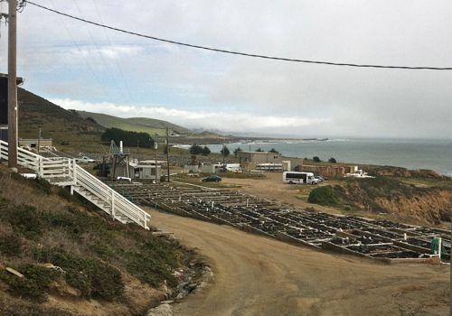 The Abalone Farm in Cayucos, California