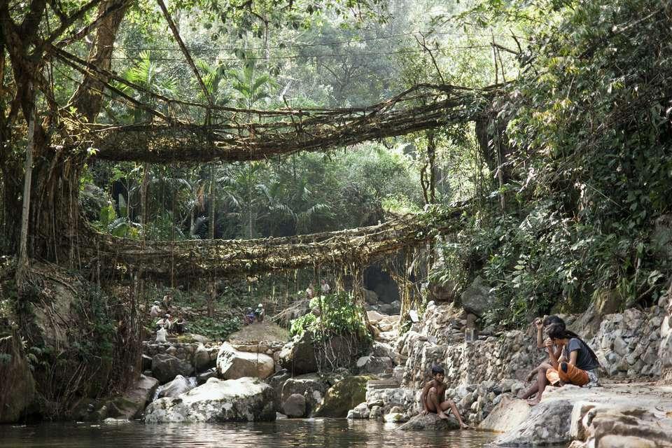 Double-decker root bridge.