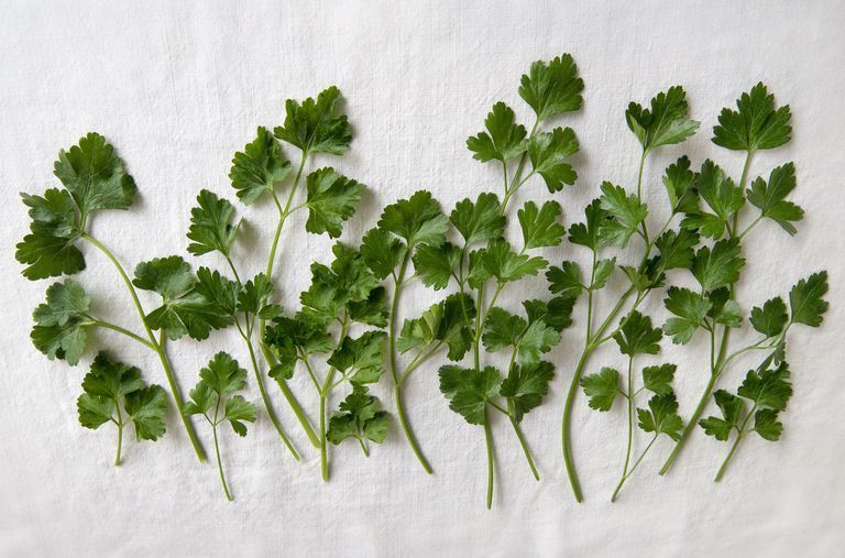 Parsley on white cloth.