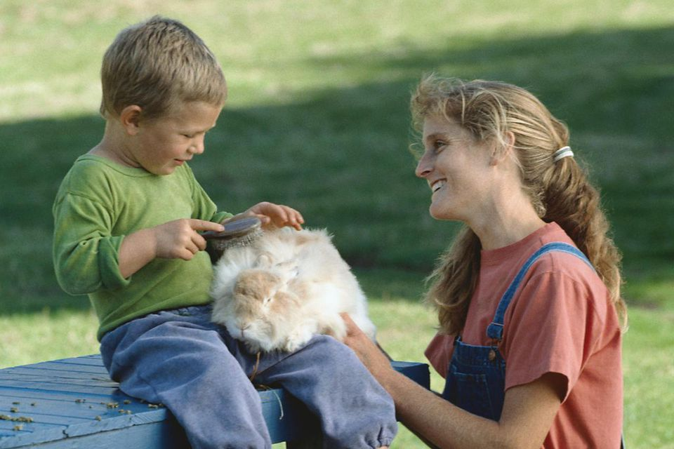 Child brushing a rabbit