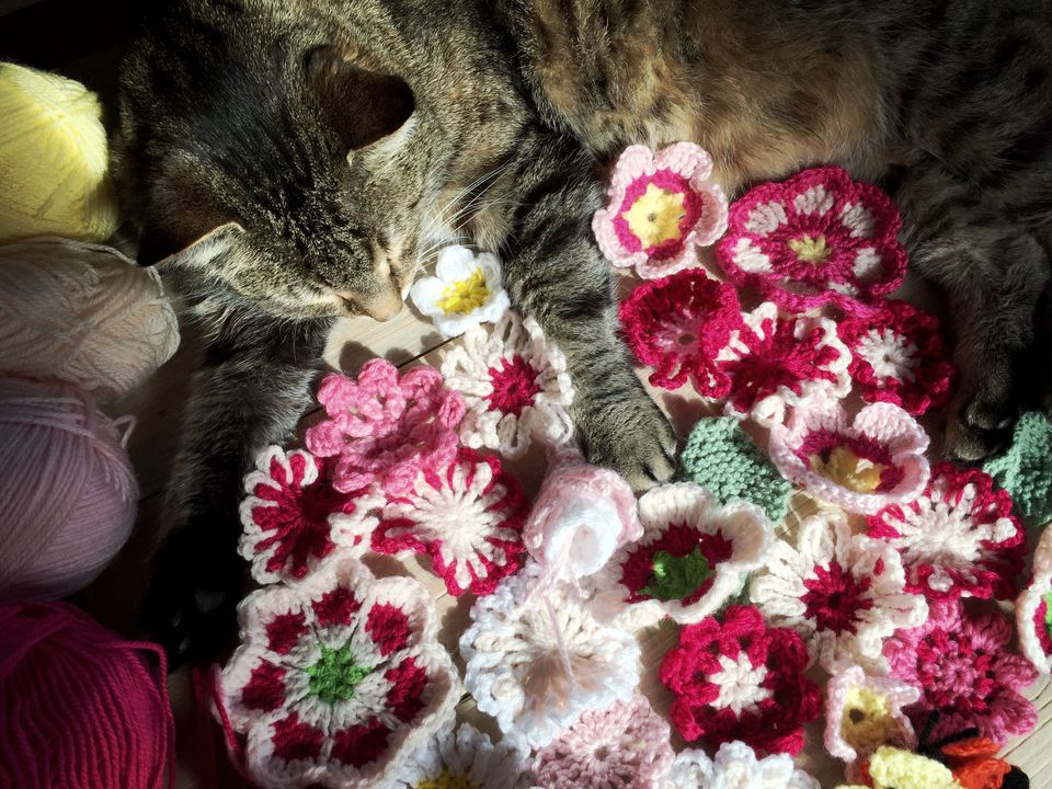 Many crocheted flowers with yarn and cat