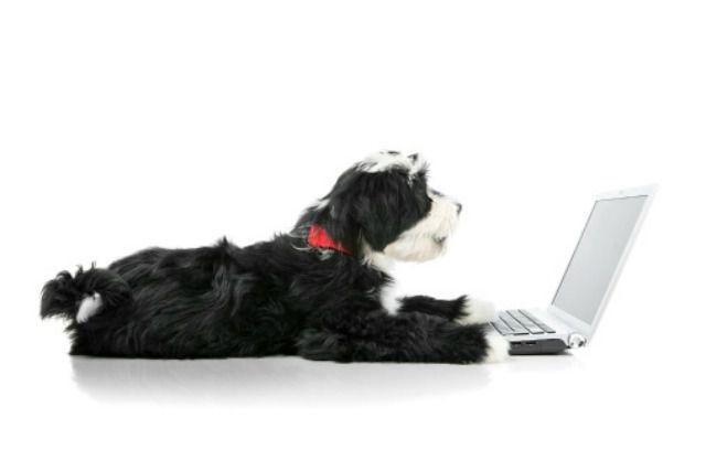 Buy a business plan already written for pet