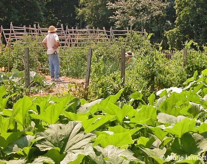 How Much to Plant Per Person in the Vegetable Garden