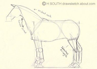 How to draw a horse in simple steps draw a horse step three outlines ccuart Images