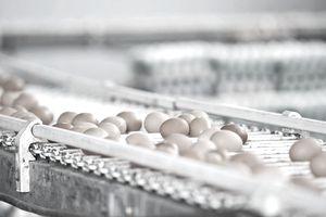brown eggs on conveyor belt