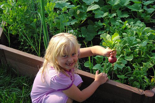 A young girl enjoys working in her family's garden.