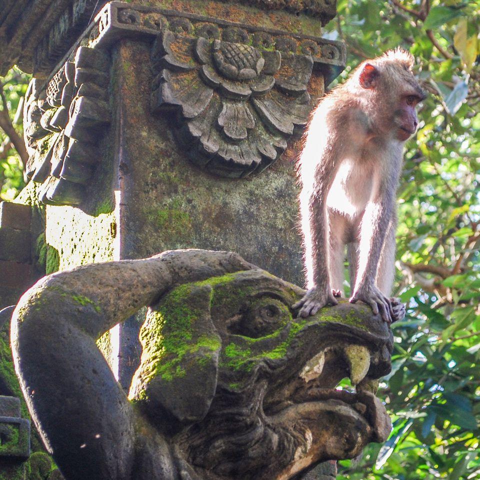Monkey perching on statue in Ubud Monkey Forest, Indonesia