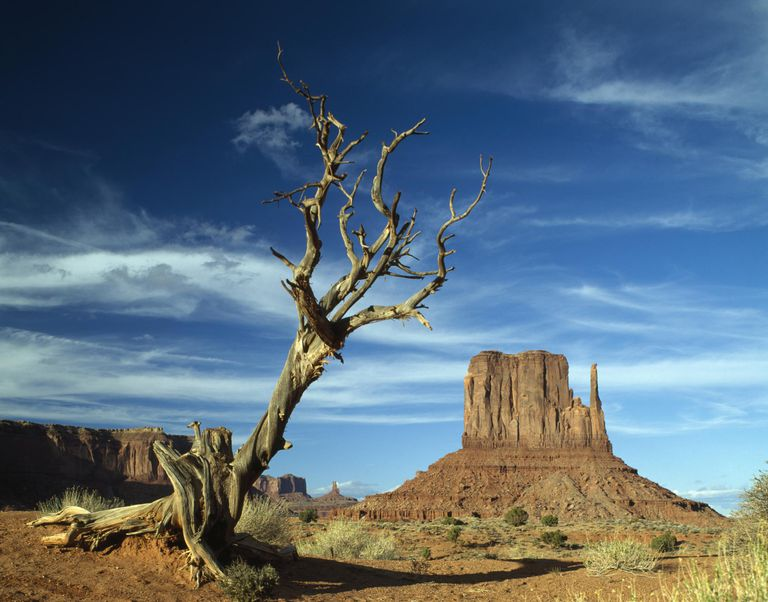 Mitten Bute in Monument Valley