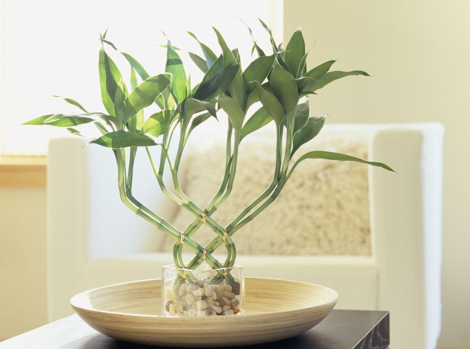 Pflanzen Feng Shui