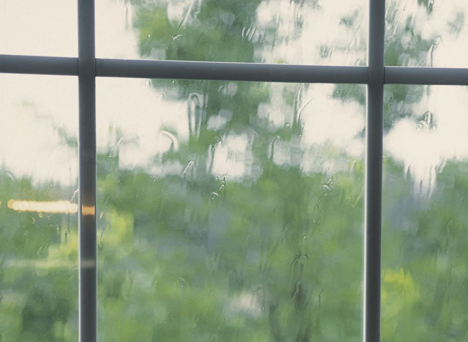 Tree in rainy weather through window