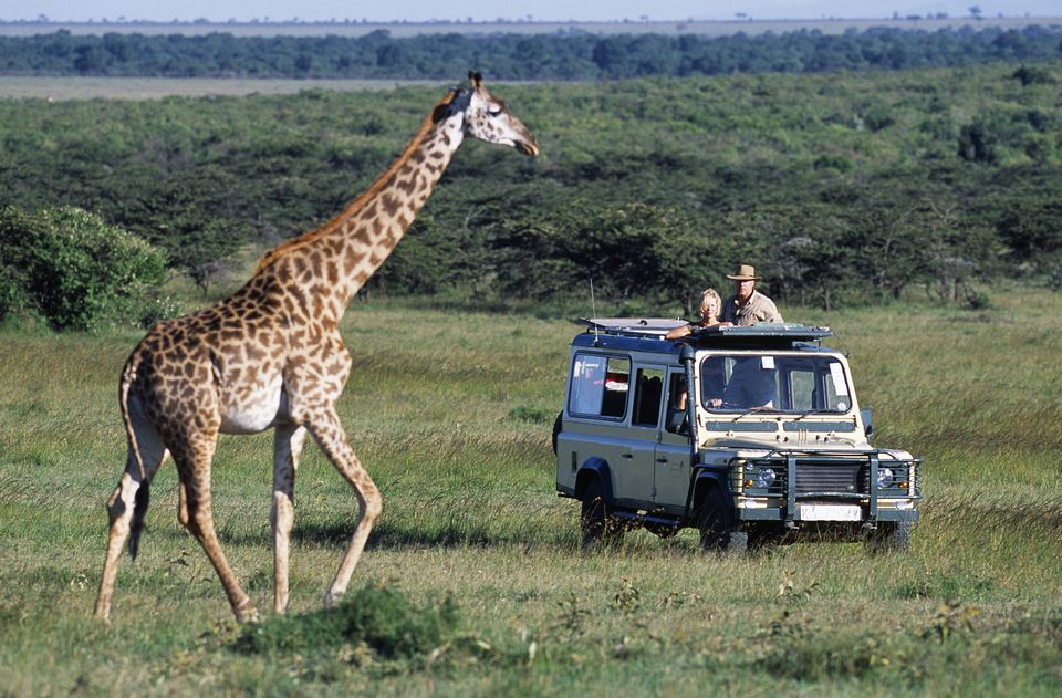 The Ultimate Guide to Choosing the Right Safari for You
