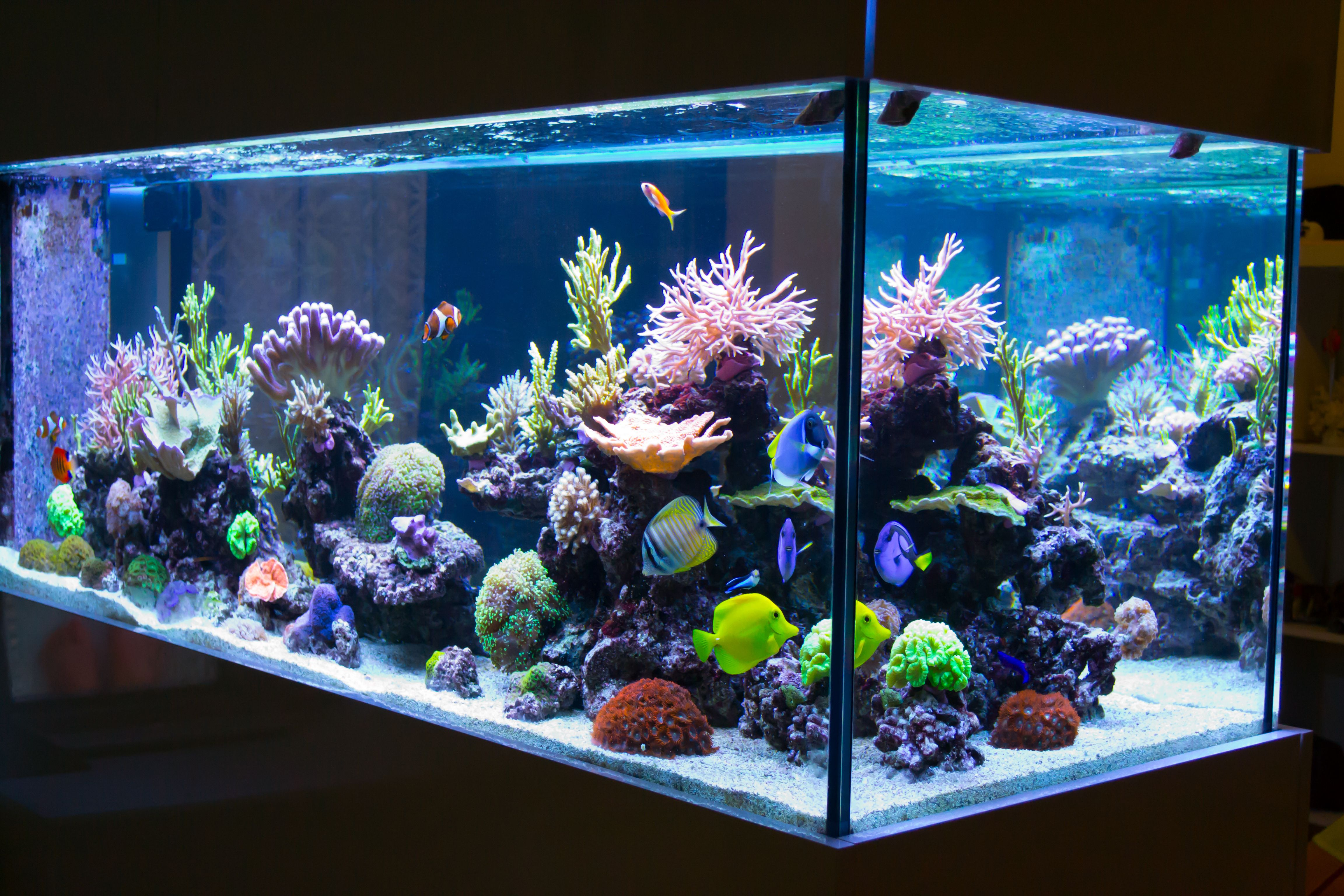 What Do I Feed My Corals in a Seawater Aquarium