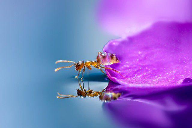 Ant flower petal reflection