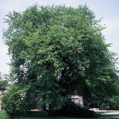 Identifying The Most Common Hardwood Trees