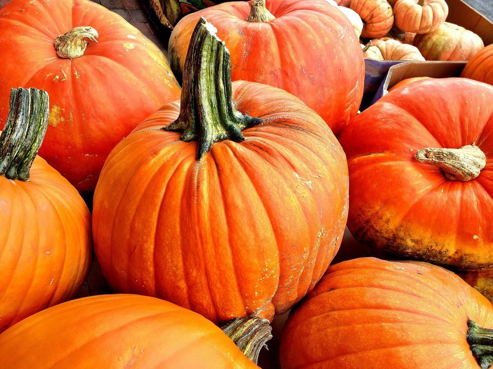 European Pumpkins Got Their Start In The Americas