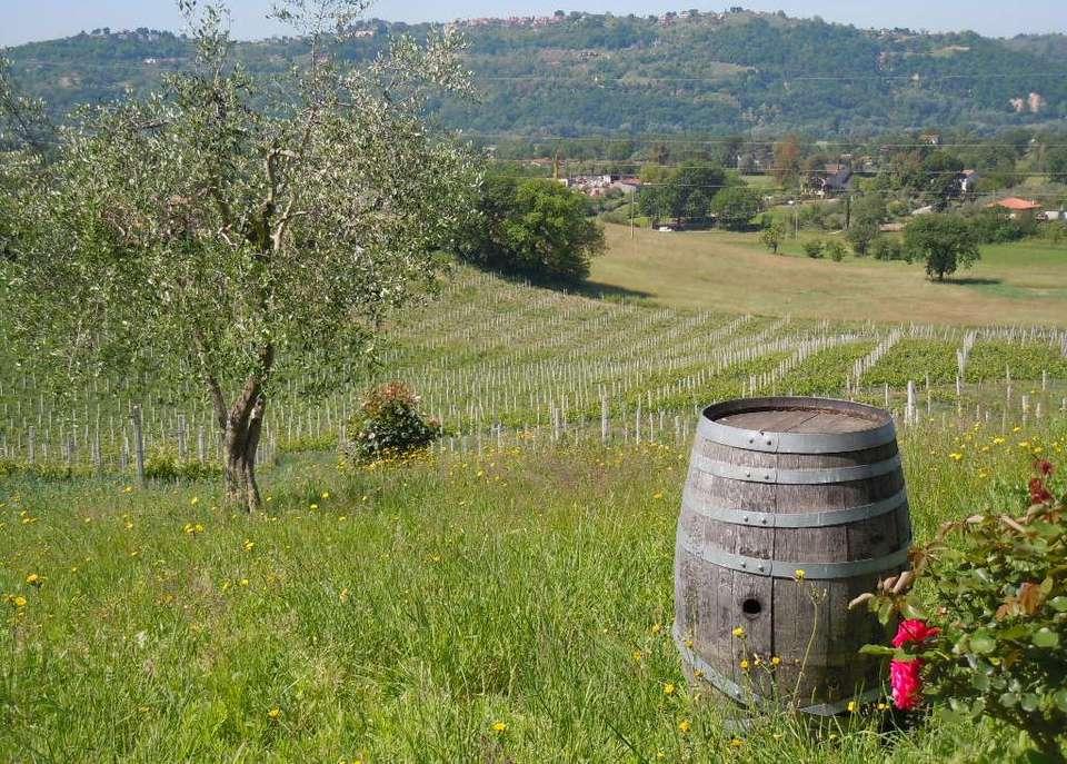 Sabina_winery_near_Rome.jpg