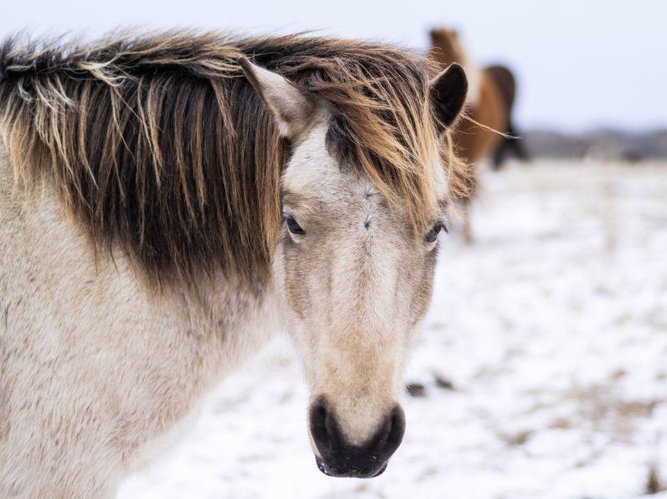 Fuzzy, unruly pony mane.