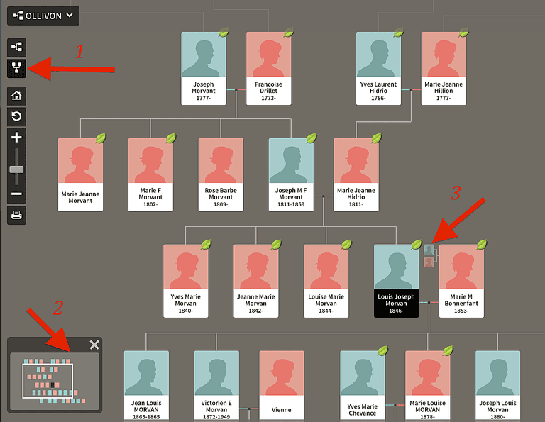 interactive family tree template - how to navigate an ancestry member tree