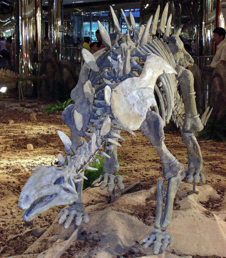 Pictures and Profiles of Stegosaur Dinosaurs