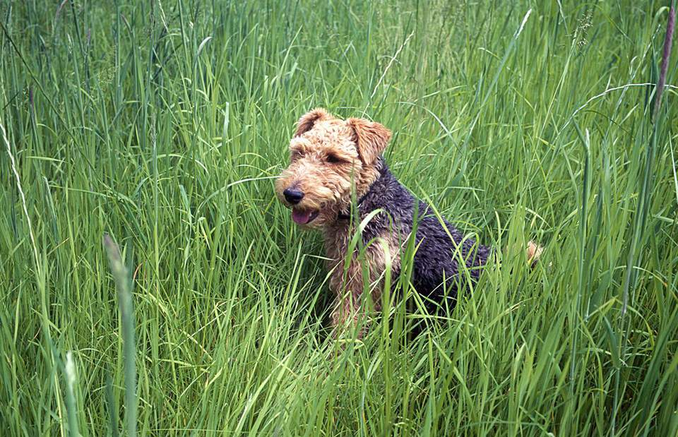 Dog in long grass.