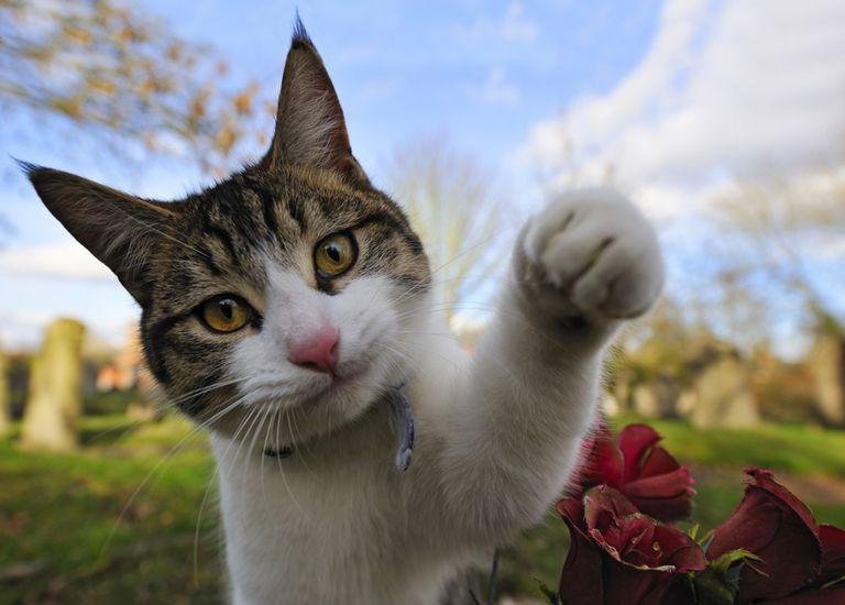 cat animal angel spirit guide cemetery