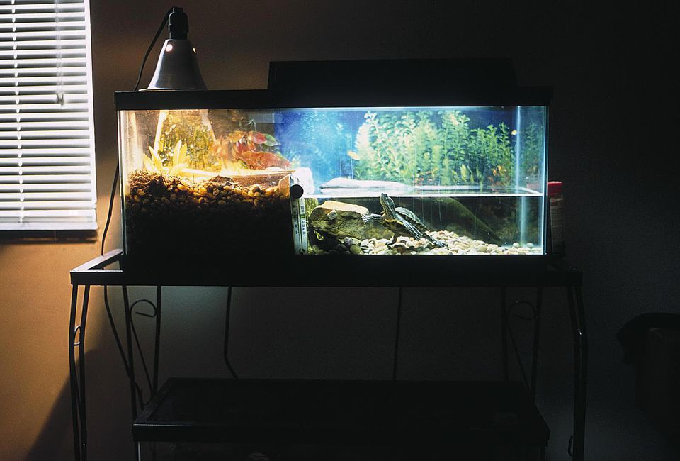 Keeping The Water In Your Turtle Tank Clean