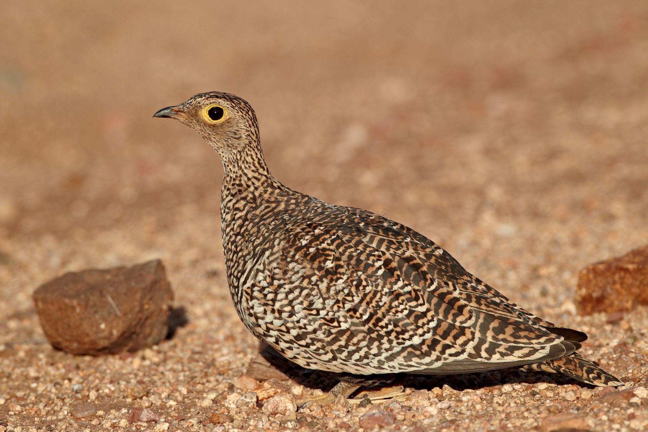 a beginner u0027s guide to 30 basic bird groups