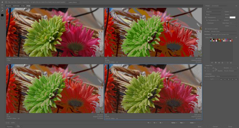 Image shows the 4-Up view of Photoshop's Save for web