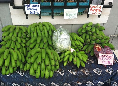 Image of Bananas at Hilo Farmers Market
