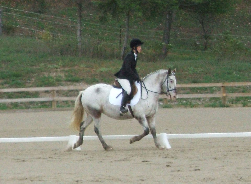 Rider posting the trot on a horse.