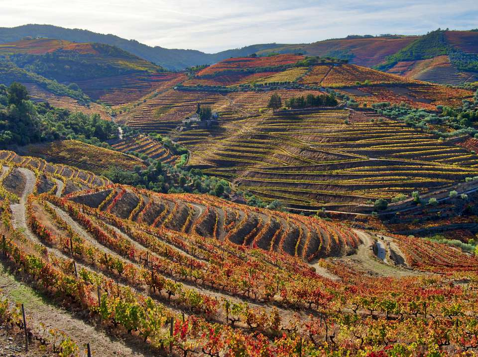 Autumn Color in the Vineyards and hills of the Douro Valley