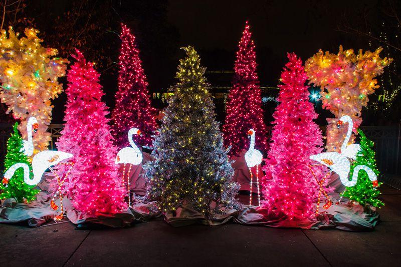 Wild Lights at St. Louis Zoo