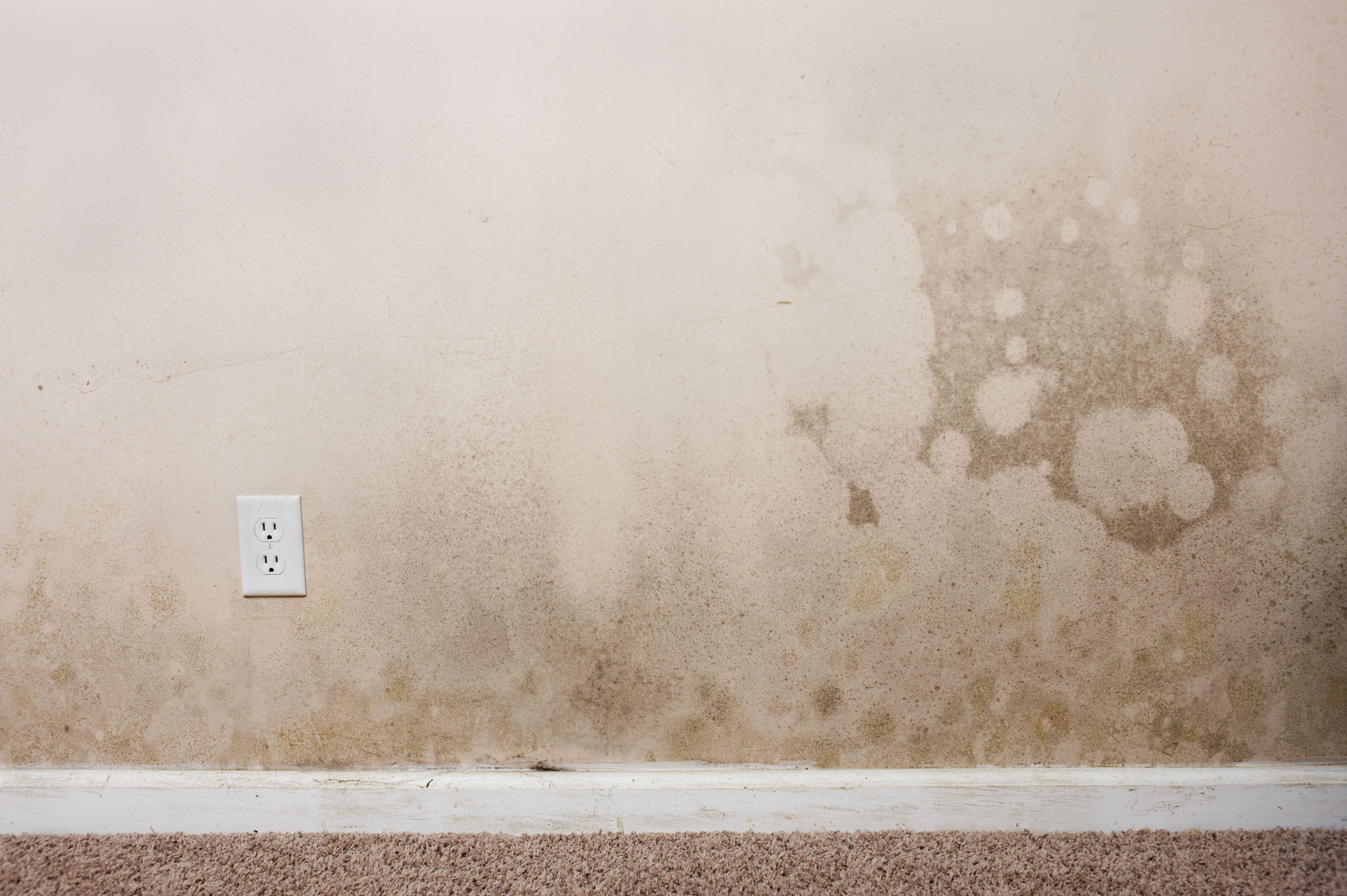 Mold Resistant Drywall Guarantees A Mold Free House