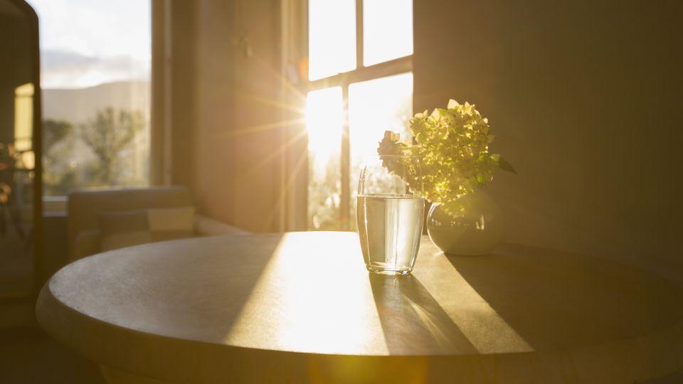 Sun shining in window behind flower in glass