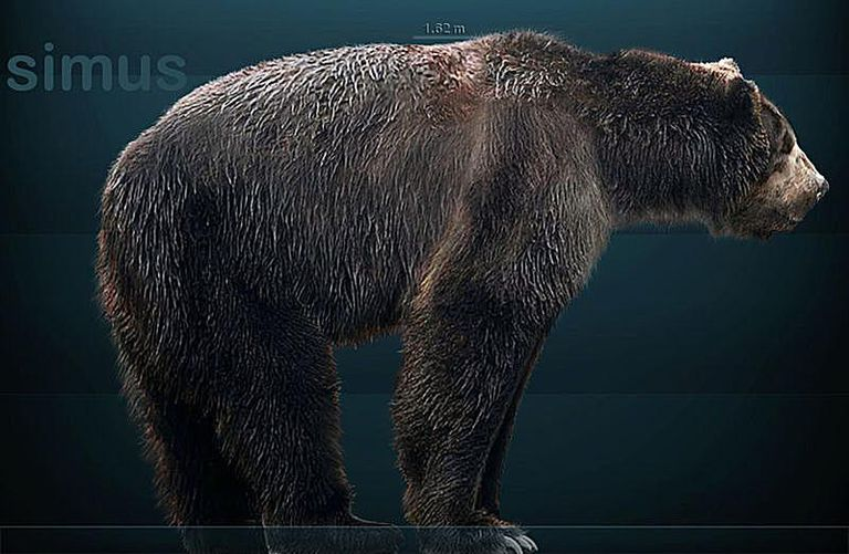 giant short faced bear arctodus simus