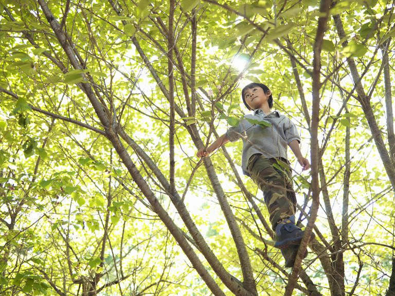 A fearless tree climber shows physical confidence