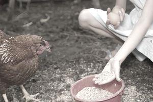 Germany, Brandenburg, Girl feeding hen
