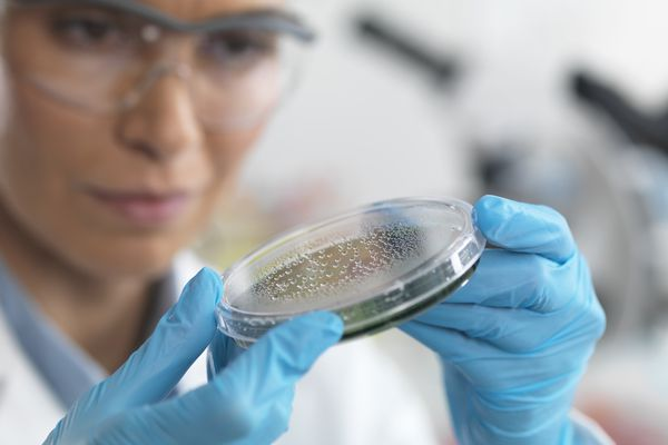 Female scientist examining a petri dish