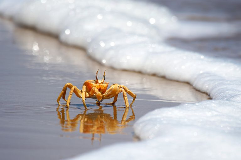 This crab is one of about 42,000 living species of crustaceans.